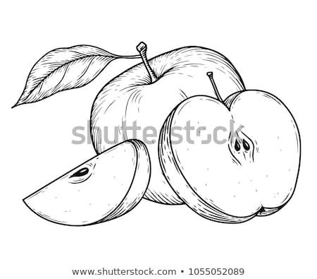 яблоки Vintage стиль линия искусства иллюстрация Сток-фото © ConceptCafe