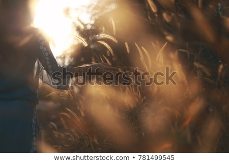 Silhouettes of grass and spikelets in a field at sunset Stock photo © manera