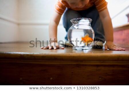 Guardando Goldfish ciotola divertimento ragazzo Foto d'archivio © IS2