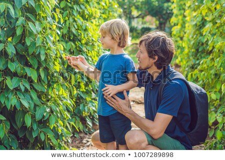 Father and son on a black pepper farm in Vietnam, Phu Quoc Stock photo © galitskaya