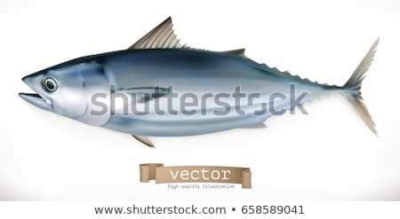 Fish with Fins Closeup Icon Vector Illustration Stock photo © robuart