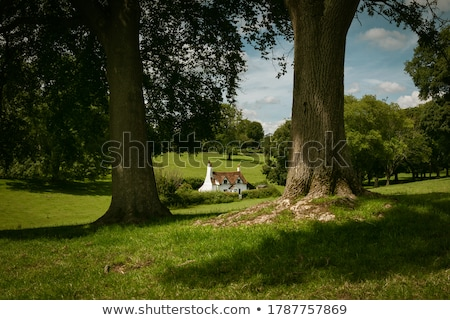 View of cottages from the hillside, England Stock photo © jayfish