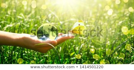 Vidrio mundo amarillo primer plano largo sombra Foto stock © cosma