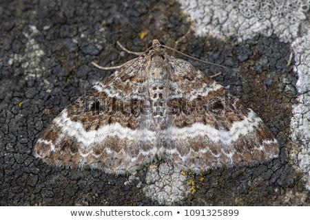 ковер дерево трава бабочка крыльями луговой Сток-фото © Rosemarie_Kappler