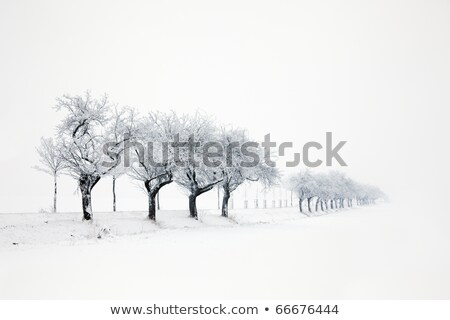 snow covered field in winter in Thuringia Stock photo © meinzahn