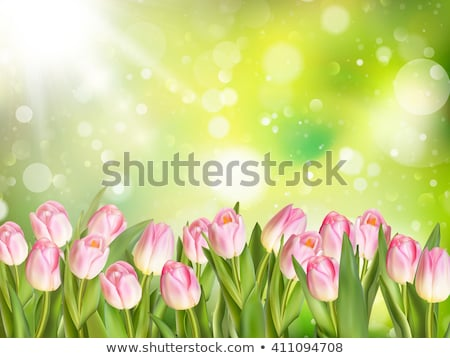 bouquet of beautiful tulips eps 10 stock photo © beholdereye