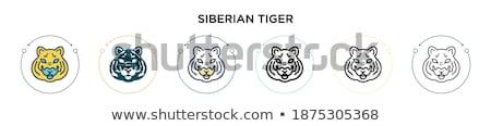 Deux tigres zoo signe illustration nature Photo stock © bluering