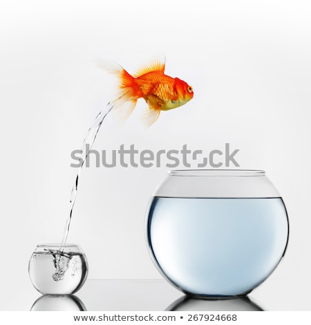 Improvement and moving concept with a goldfish jumping from a dirty aquarium to a clean one Stock photo © alphaspirit