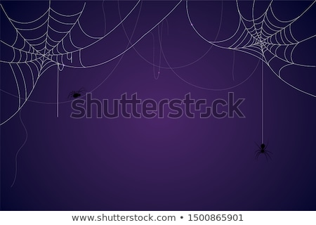 Halloween background with cobweb Stock photo © Kotenko