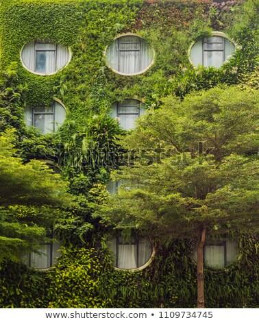 緑色の葉 · 春 · 壁 · 抽象的な · 葉 · 背景 - ストックフォト © galitskaya