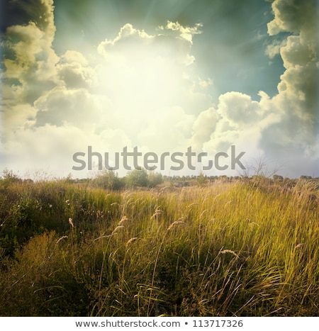 Zielona trawa dziedzinie żółty Dandelion lata charakter Zdjęcia stock © karandaev