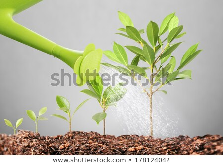 Feeding a young growing business. stock photo © lichtmeister