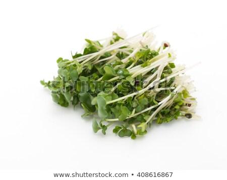 Broccoli isolato bianco top view alimentare Foto d'archivio © Bozena_Fulawka