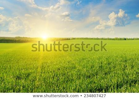Jesienią wiejski dziedzinie mętny Błękitne niebo charakter Zdjęcia stock © Anneleven