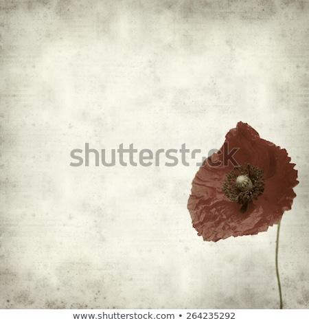 sepia poppy flowers on stained paper Stock photo © sirylok
