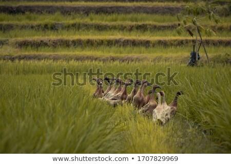 Yeşil çim çim alanı doğa Stok fotoğraf © njnightsky