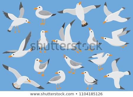 cabeça · gaivota · cara · oceano · azul · branco - foto stock © jeancliclac
