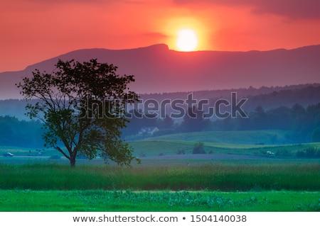 日没 米国 バーモント州 ツリー 太陽 ストックフォト © DonLand
