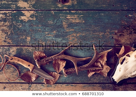 hunting still life stock photo © tolokonov