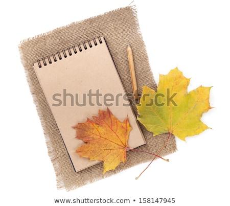 őszi levelek régi papír retro illusztrált absztrakt körök Stock fotó © marinini