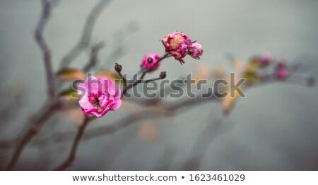 закрывается бедро кустарник осень природы Сток-фото © hraska