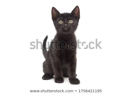 aranyos · fekete · kiscica · fehér · kicsi · izolált - stock fotó © bloodua