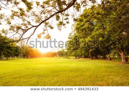 park · zonsondergang · groene · digitale · imitatie · schilderijen - stockfoto © unweit