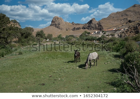 Donkey in a field Stock photo © njnightsky