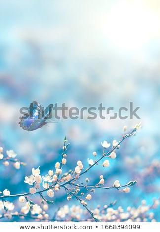 Virágok pillangó kép illusztráció illusztrált rózsaszín Stock fotó © Irisangel