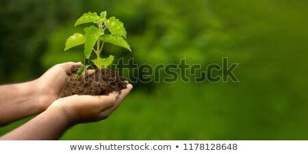 Zöld férfi fa élet fenntarthatóság környezeti Stock fotó © kabby