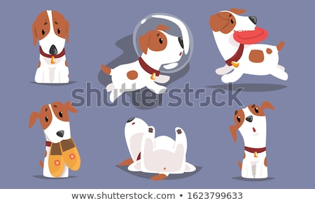 Dogs in different actions Stock photo © bluering