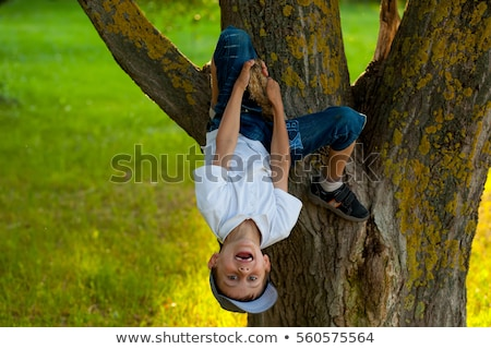 Boy, 7 playing in tree Stock photo © IS2