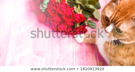 Cute woman is sniffing a bouquet of pink roses Stock photo © artjazz