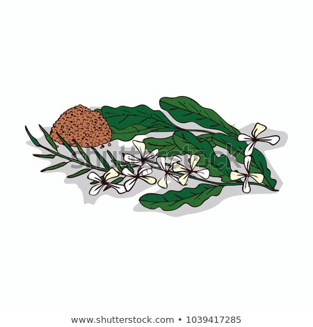 isolado · planta · branco · botânico · desenho - foto stock © alexanderandariadna