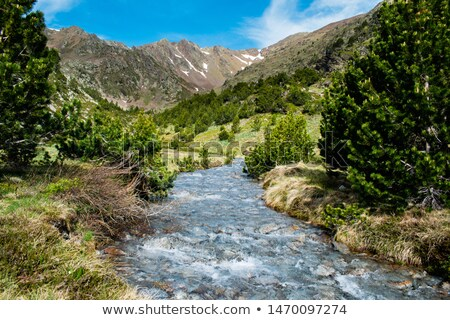 River of melting snow running down from mountain stock photo © Mps197