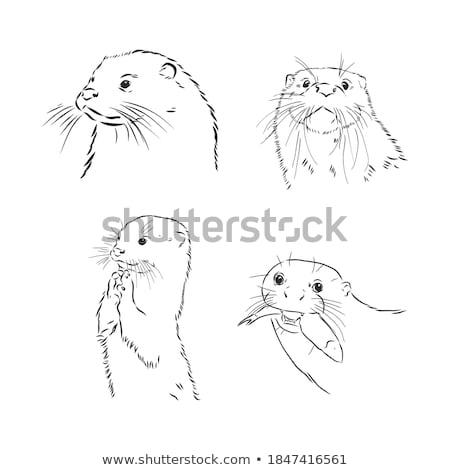 Asian Small Clawed Otter Black and White Mascot Stock photo © patrimonio