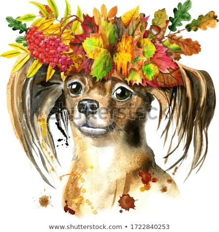 Cute · белый · щенков · собака · листьев · осень - Сток-фото © natalia_1947