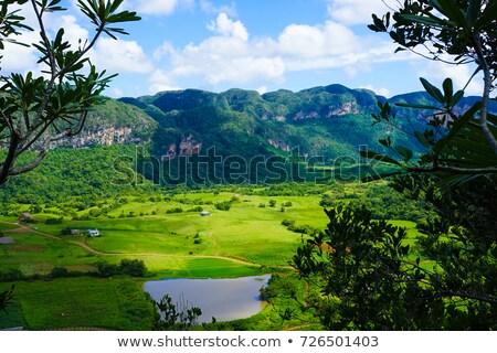 долины · Рио · Куба · пейзаж · деревья · путешествия - Сток-фото © phbcz