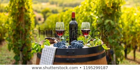 red wine in bottle and basket of grape  Stock photo © inaquim
