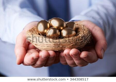 Ninho ovo feminino mãos ninho de pássaro Foto stock © elvinstar
