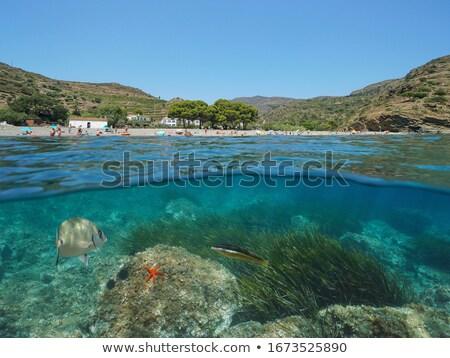 Peu plage arbre mer terre océan Photo stock © arocas