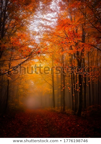 fall foliage in foggy forest stock photo © hofmeester