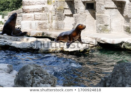 two seal swimming nature scene Stock photo © goce