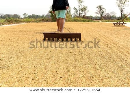 secar · arroz · sementes · massa · produto · fundo - foto stock © stoonn