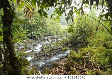 Rio Mindo, western Ecuador, river running through cloudforest at Stock photo © meinzahn