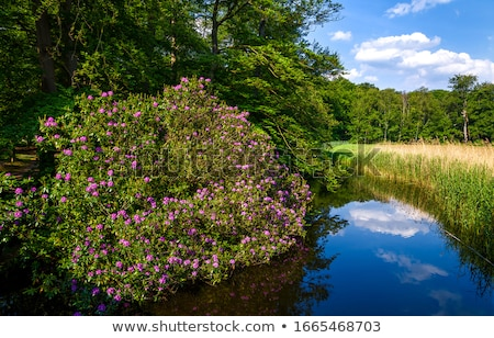 Bush Stream Stock photo © rghenry