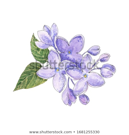 Stock photo: lilac violet flowers