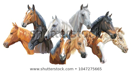 Vector image of an horse on white background Stock photo © netkov1