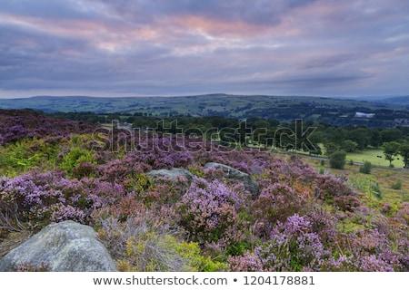 pôr · do · sol · ocidente · yorkshire · 2015 · tempo · flor - foto stock © chris2766