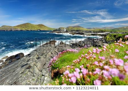 kerrys wild atlantic way view Stock photo © morrbyte